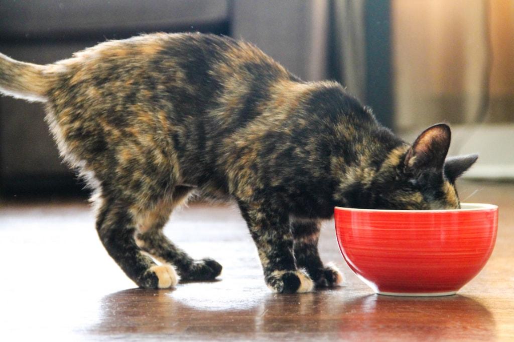 image-cat